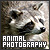 Photography: Animal/Wildlife